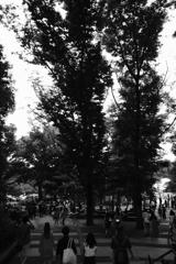 井之頭公園 出迎えてくれる木