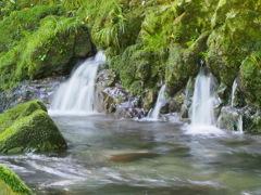 苔むす川に癒されて3