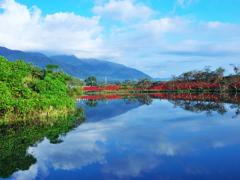 曼殊沙華の咲く風景