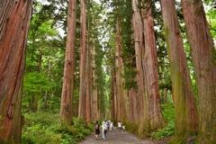 立派な杉の木