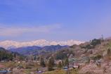 里山も桜咲く