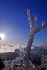 季節外れの霧氷