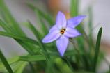 自宅の庭にも春が来た