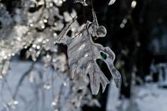 氷結の木枝