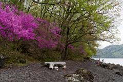湖畔の春を彩る