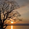 冬枯れの湖畔・夕景
