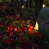 灯りに浮かぶ落葉