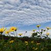 雲も秋の装い(1)