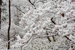 武蔵野雪景色Ⅰ