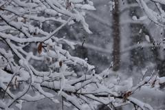武蔵野雪景色Ⅲ