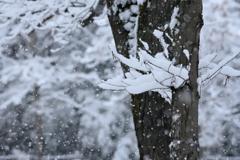 武蔵野雪景色Ⅱ