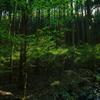 静かな森に鳥の声