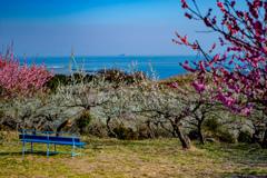 海の見えるベンチで花に囲まれる。