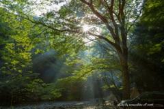 森の中で朝を迎える