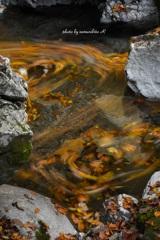 落ち葉の流れ