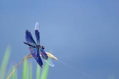 見沼自然公園 蝶蜻蛉①