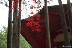 紅葉 2017 比叡山