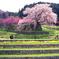 又兵衛桜の春宴
