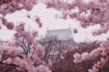 春雨に煙る大阪城