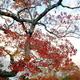 奈良公園の錦絵