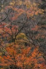 晩秋の箕面