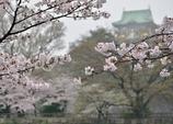 春雨の大阪城