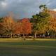 奈良公園の秋夕景
