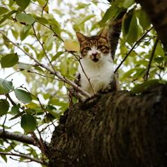 大阪城西の丸庭園の猫