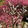 紅白の梅の饗宴