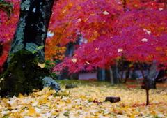晩秋の永観堂