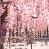 咲き乱れて 〜2017春〜