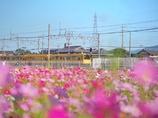 幸せを運ぶ黄色い電車❁.*・゚