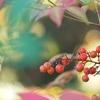 深まりゆく秋に。。。