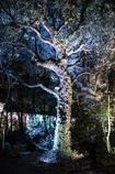 まるでアリスの森のよう。。。
