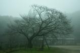 霧に包まれた分校跡の春。