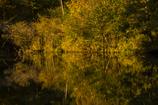 夕暮れの燃える秋