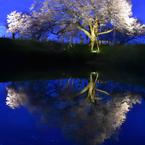 NIKON NIKON D7200で撮影した(湖面に映る一本桜)の写真(画像)