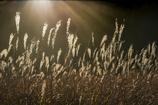 光芒に燃える朝の高原