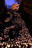 ブルーモーメントと竹あかりの廣瀬神社