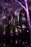 さらに進むと紫の沼が。。。