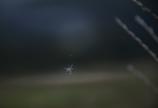 九重で出会ったクモ