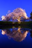 蒼い晩春にて
