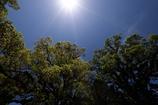 新緑の季節(とき)の始まり