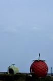 イチゴとメロンはお友達?それともライバル?