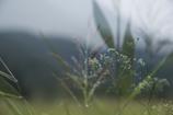 秋を感じる湿原にて