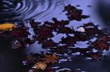 揺れ動く秋。