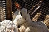 「ウサギさんだんご」!?