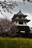 雨中桜観 竹崎城