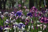 てんこ盛りのお花畑が大合唱!