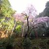 もうすぐ会えるね、虎尾桜さま。。。